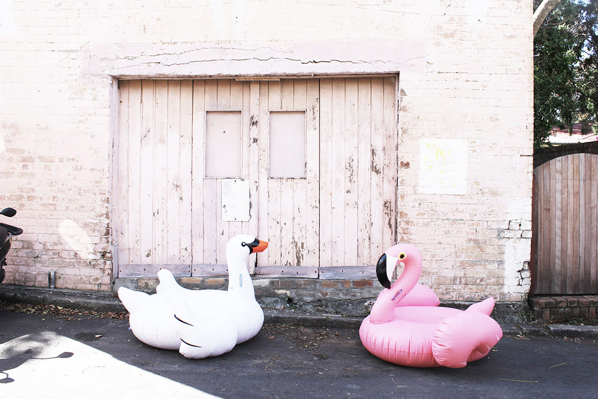 inflatable swan and flamingo